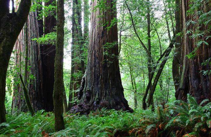 Baselt RNP TallTrees Grove 2