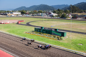 Ferndale Humboldt County Fair Horse Races