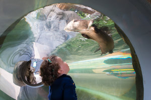 Eureka Sequoia Park Zoo Otter Exhibit