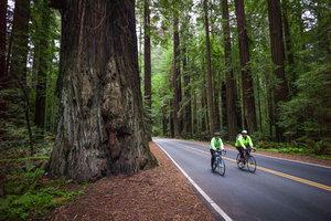 Bike Touring on Avenue of the Giants, So. Hum.