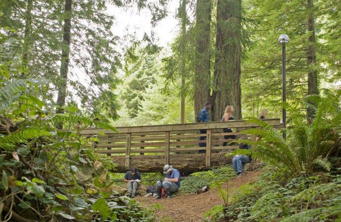 HSU Flickr, Redwood Park Behind Campus